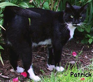In Loving Memory of Patrick (1996-2000)